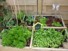 gyo nie mehr stangensellerie kaufen garten garden pinterest kompost garten und sellerie. Black Bedroom Furniture Sets. Home Design Ideas