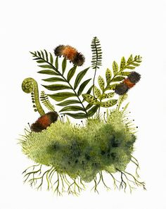 Woolly Bears and Ferns Print of my original watercolor painting. (The original has been sold) 8 1/2 x 11 Archival print printed with Epson