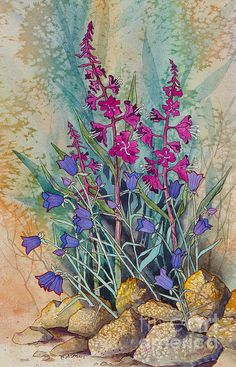 Fireweed and Bluebells. watercolor, 11 x 15 Teresa Ascone