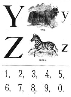 Y is for YAK. Z is for ZEBRA
