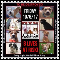 "***8 LIVES TO BE DESTROYED 10/6/17 @ NYC ACC. This is a HIGH KILL ""CARE CENTER"". Great dogs put down daily! Babies, puppies, mamas, healthy, friendly dogs. POOR LIVING CONDITIONS & MINIMAL CARE. Please Share! Click for info & Current Status : http://nycdogs.urgentpodr.org/to-be-destroyed/"