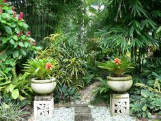A beautiful, tropical garden - just what the doctor ordered!  I grew up in the tropics and find this style to be calming and peaceful.  If only I had settled somewhere where I could plant a palm tree, some bromeliads and even throw in some hibiscus and frangipani...hmmm <3