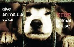 Stop Animal Cruelty Quotes | share this project report project embed tweet email rss share animals ...