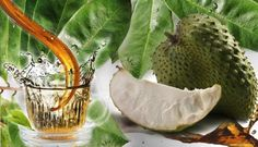 Soursop – A Fruit With Amazing Benefits That You Had No Idea About�http://usfeed.net/S01L55NYTK/202009