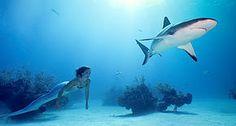 Mermaiding - Wikipedia, the free encyclopedia