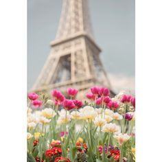 Paris Photography Tulips at the Eiffel Tower, Paris in Spring, French... (245 SEK) ❤ liked on Polyvore featuring home, home decor, wall art, spring wall art, paris home decor, photographic wall art, pink home decor and pink wall art