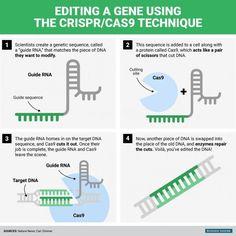 SeNcilla infografía de CRISPR, ahora que estamos buscando información sobre el tema