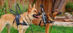 Dog Harness SALE! Introducing BLD's newest harness design.