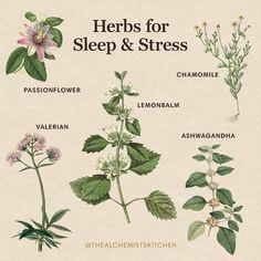Ayurvedic Herbs, Healing Herbs, Medicinal Plants, Natural Healing, Ayurveda, Natural Herbs, Magic Herbs, Herbal Magic, Natural Medicine