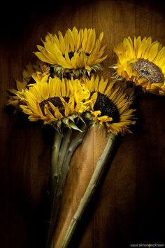 SUNFLOWERS.......PARTAGE OF WAW  MALEE.....ON FACEBOOK......