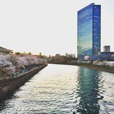 【taniyabose81】さんのInstagramをピンしています。 《Walking back at sunset towards my hotel ! The beautiful cherryflowers and the little lake with a corporate multistoried skyline!!! #osaka #osakabusinesspark ##kansai #japan  #sunsets #reflection #cherryblossoms #sakura #hanami  #iphone6 #iphonephotography #beautiful #lovejapan #instagram #instapic #instastyle #instalife #wanderings #travels #japndiaries #japantrip #passionpassport @passionpassport @cntraveler @cni_now @lonelyplanettraveller @lonelyplanet…