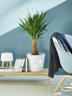 Yuccapalmen er en av de enkleste plantene å få til. Indoor Plants Clean Air, Mason Jar Bathroom, Low Lights, House Plants, Bean Bag Chair, Planters, House Styles, Interior, Blog