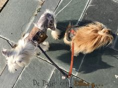 Chic fashion for pets Textiles, Chinese, Chic, Dogs, Animals, Fashion, Fur, Shabby Chic, Moda