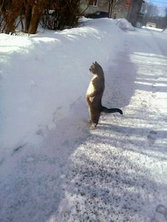 a fine looking cat admiring some fine looking snow