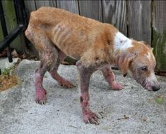 How can someone do this to an animal? repin if you are against animal cruelty