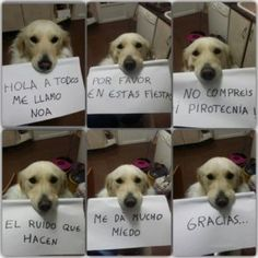 mascotas-pirotecnia-cohetes-petardos-miedo Animals And Pets, Baby Animals, Funny Animals, Cute Animals, Baby Dogs, Dogs And Puppies, Doggies, I Love Dogs, Cute Dogs