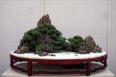 suiseki bonsai
