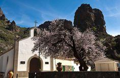 Almond Blossom, Tejeda, Gran Canaria, Spain.