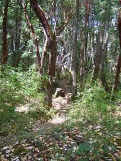 The shady part of the trail.