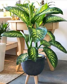 Beautiful Indoor Plants Design in Your Interior Home These trendy Home Decor ideas would gain you amazing compliments. Check out our gallery for more ideas these are trendy this year. Easy House Plants, House Plants Decor, Plant Decor, Plant Design, Garden Design, Living Room Plants, Decoration Plante, Pot Plante, Decorative Planters