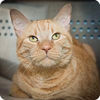 Adopt A Pet :: Kirby - New York, NY