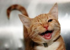 TOP 31 Funny Cat Pictures