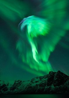 Rising high into the sky the Northern Lights burst into life with a magical display that looks like a phoenix.