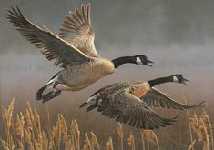 Canada Pair  - Wildlife painting by Scot  Storm