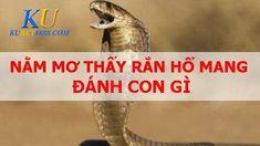 Giải mã giấc mơ thấy rắn hổ mang điềm báo gì? đánh số gì?