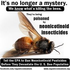 ( - p.mc.n. ) It's no longer a mystery. We know what's killing the bees. They're being poisoned by neonicotinoid insecticides, manufactured by Bayer and Syngenta. Why do we care? Of the 100 crop species that provide 90 percent of the world's food, over 70 are pollinated by bees. No bees, no pollination. No food.