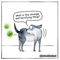 The Strange and Terrifying Thing – Red and Howling I Love Dogs, Puppy Love, Cute Dogs, Funny Dog Memes, Funny Dogs, Cartoon Dog, Dog Cartoons, Dog Rules, Dog Boarding