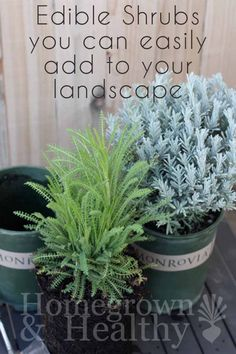 Fill your yard with shrubs that are both beautiful and functional! Here's a list of my favorite options from #monrovia