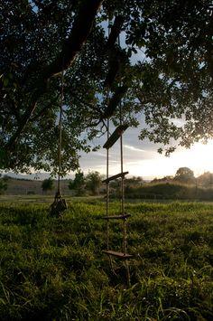 Rope Swing, Queensland