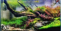 Aquascaping, Fish Tank Terrarium, Betta Aquarium, Fresh Water, Fish Tanks, In This Moment, Scp, Pets, Aquarium Fish