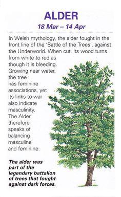 Alder Tree 18 mar - 14 Apr
