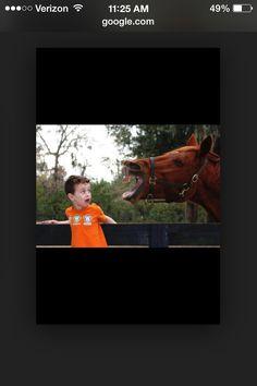 Yikes! Funny Horses