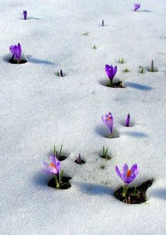 33 Ideas Flowers Winter Snow Signs For 2019 Amazing Flowers, Pretty Flowers, Mother Earth, Mother Nature, Spring Flowers, Wild Flowers, Snow Flower, Spring Sign, Winter Garden