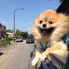 I want to be this happy about a car ride....