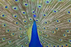 Featured on Poetic Poultry! https://fineartamerica.com/groups/poetic-poultry-.html