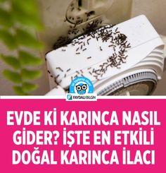 Evde karınca nasıl gider? İşte en etkili doğal karınca ilacı #karınca #ev #oda #temizlik #hayvan #doğal #ilaç #çözüm #etkili #karıncailacı #kovucu #bitkisel #sağlık #hijyen #limon #sirke #tatlı #şeker Clean House, Cleaning Hacks, Important Facts, Diy And Crafts, Life Hacks, Healthy, Recipes, Tikal, Medical