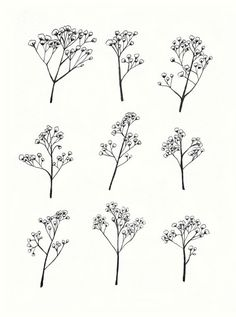 Gypsophila Baby's Breath Flower Illustration A4 by mayandjuniper