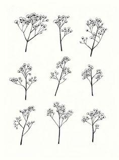 Gypsophila Baby's Breath Flower Illustration A4 by mayandjuniper
