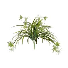18'' Spider plant Spider Plants, Hanging Pots, Green Plants, Artificial Plants, Houseplants, Greenery, Decoration, Photo Credit, Image