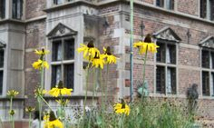 It is not only in the King's Garden and the Rosegarden were you will find flowers. Here are some beautiful rudbeckia flowers right beside the castle.