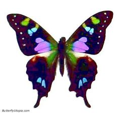 Purple Spotted Swallowtail