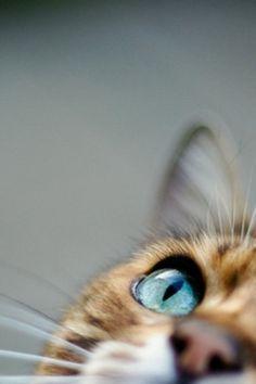猫の瞳 透明感のある中のものがよく見えて、不思議だなーって思う。