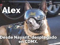 ¡Marina-Chan, digo, Frida no es la única! Amor Animal, Paw Patrol, Four Legged, Dog Love, Chihuahua, French Bulldog, Hero, Puppies, Logos