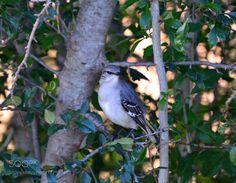 Bird in a Bush by Shamus_N