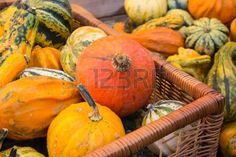 #Basket Filled With Various #Pumpkins @123rf #123rf #food #color #autumn #fall #nature #stock #photo #new #download #hires #portfolio