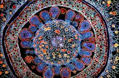 reminds me of a tapestry... but better :) cross-section of a flower ovary